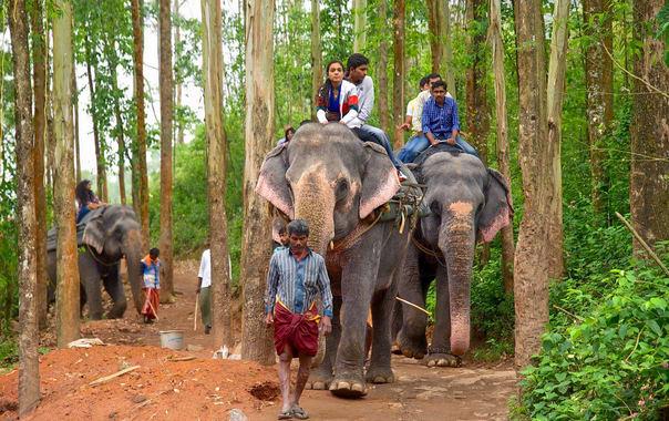 102046-carmelagiri-elephant-park.jpg