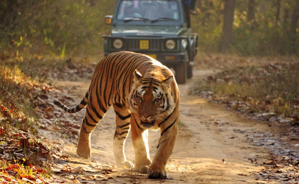 Image result for Go on a Wildlife Sanctuary Expedition