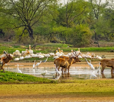 Day Trip to Bharatpur Bird Sanctuary from Agra