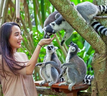 Bali Zoo Admission Ticket- Flat 20% off