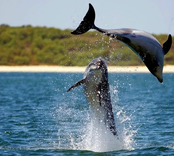 Dolphin Cruise in Goa