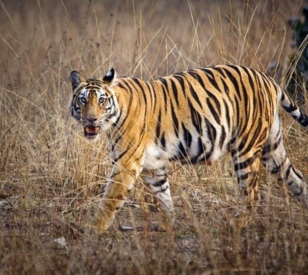Madhya Pradesh Tiger and Hill Tour