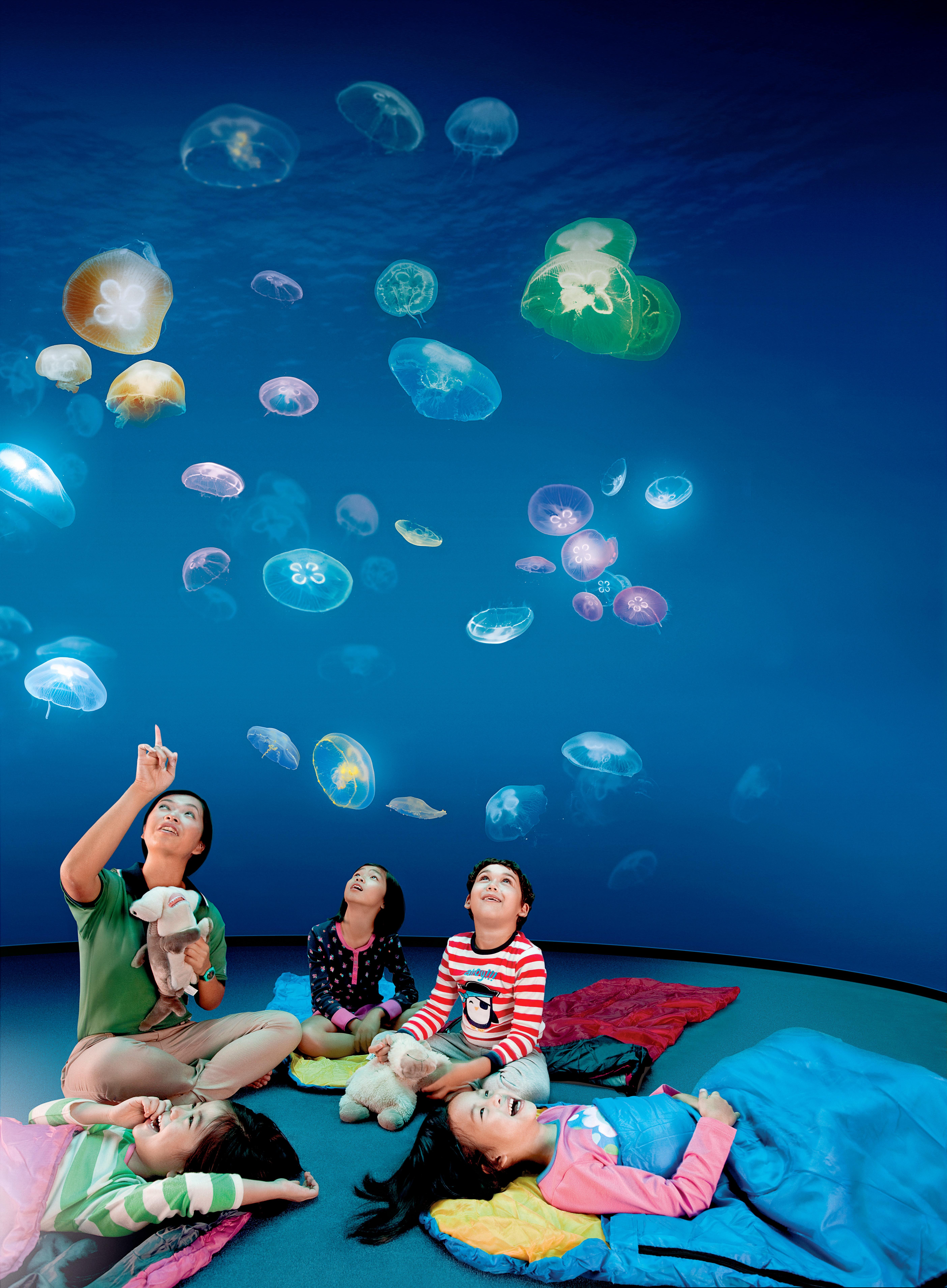 Ocean_dreams_hr.jpg