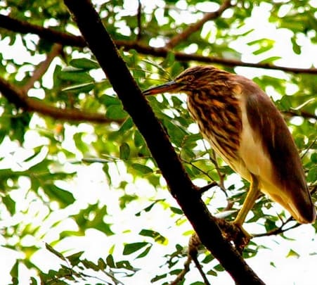 Thattekad Bird Sanctuary Salim Ali Bird Sanctuary