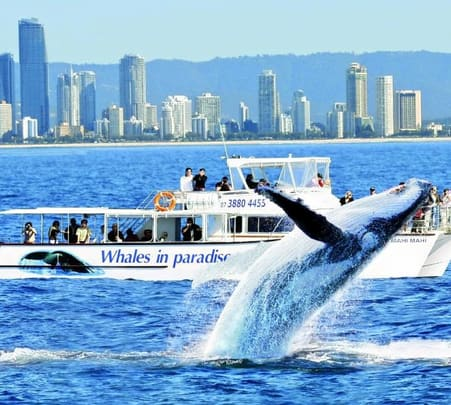 Whale Watching Tour from Goldcoast