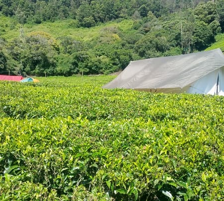 Camping by Tea Gardens Ooty