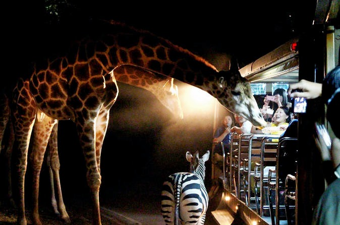 Chiang-mai-night-safari-in-chiang-mai-205556.jpg