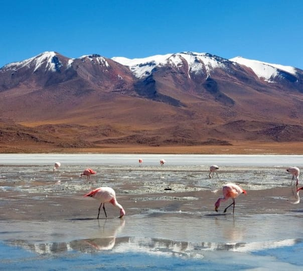 Trip to Uyuni Salt Flats in Bolivia