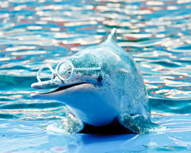 Phuket Dolphin Show Ticket - Flat 30% off