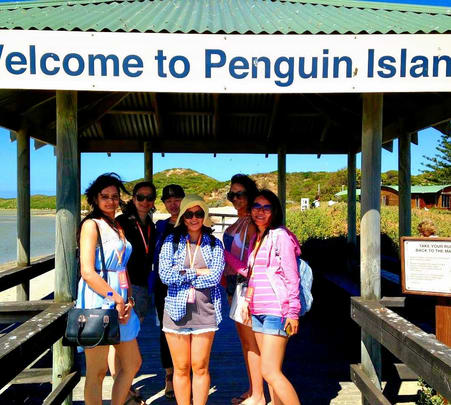 Explore Penguin Island in Perth