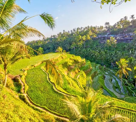 Tegalalang Rice Terrace Tour with Monkey Forest & Goa Gajah