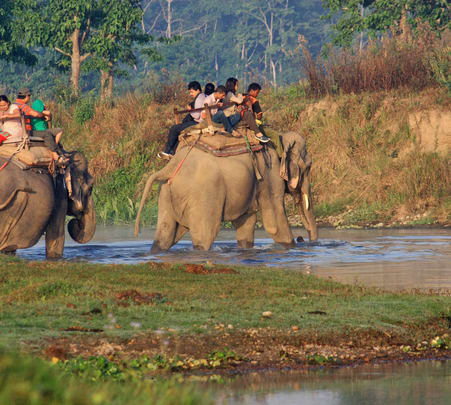 Jungle Safari at Chitwan National Park in Nepal