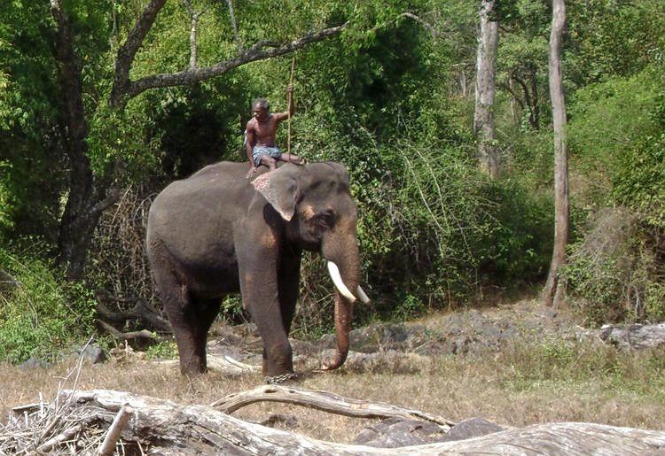 M_mnp_working_elephant.jpg