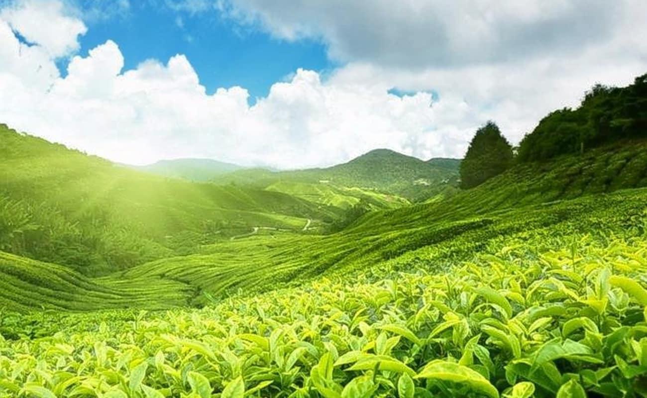 Hills Adda Instant Garden : Trek to seven hills mountain in munnar thrillophilia