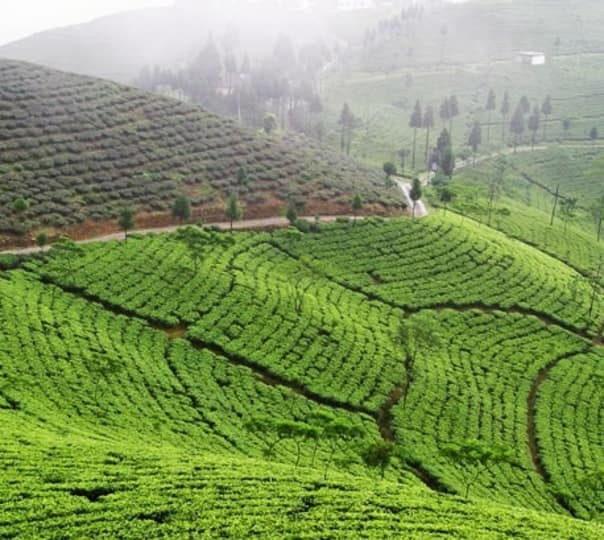 Hire a Guide in Darjeeling