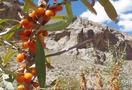 Trekking_wild_zanskar_-_padum_to_lamayuru__india_020.jpg