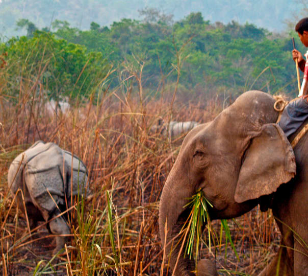 Wildlife Tour in Kaziranga National Park