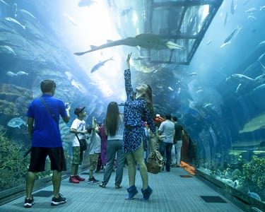 Dubai Aquarium & Underwater Zoo Combo Ticket - Flat 17% off