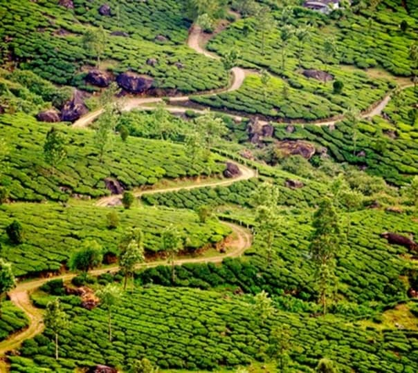 Munnar Sightseeing including Top Station
