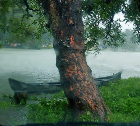 Kumarakom Sightseeing Trip, Kerala