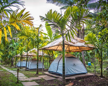 Camping with Adventure Activities in Dandeli