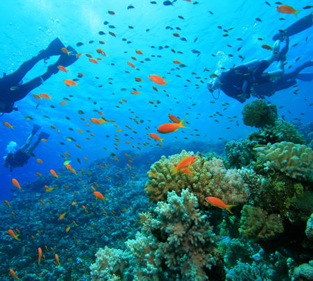 Scuba Diving in Gokarna Flat 15% off
