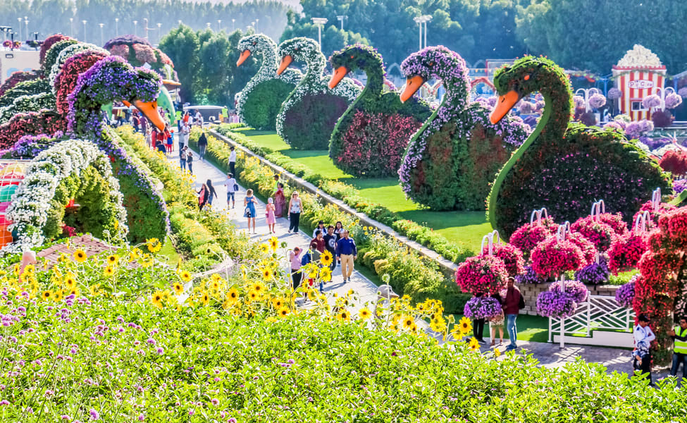 Dubai Miracle Garden Tickets Save 40 Get 500 Cashback