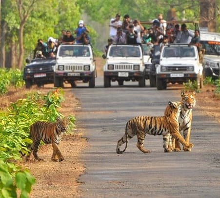 Tadoba Andhari Tiger Safari with Stay, Chandrapur