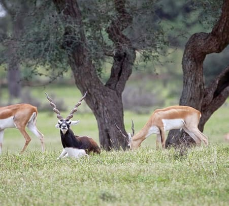 Rehekuri Blackbuck Sanctuary Photography Tour