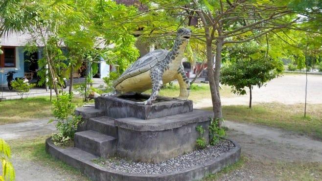 Visit Turtle Sanctuary