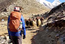 1462347195_everest_base_camp_trek_2014_159.jpg