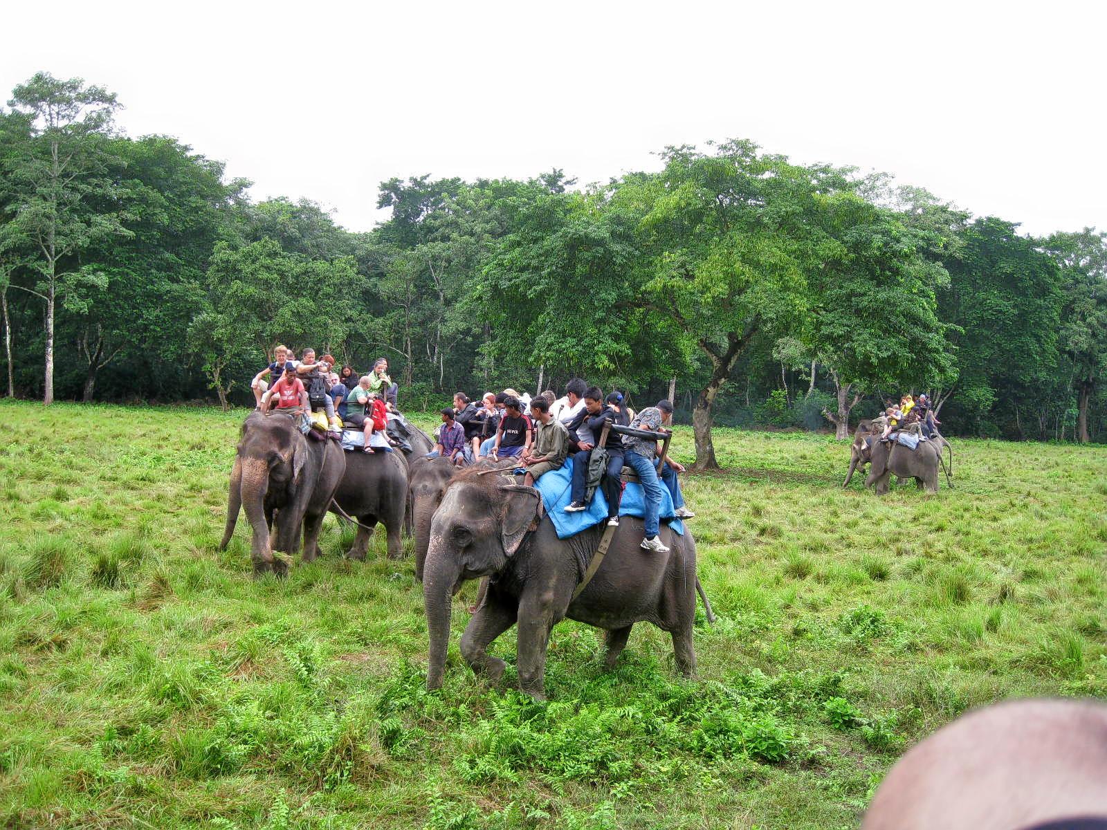 1559045370_chitwan_national_park__282010_29-87.jpg