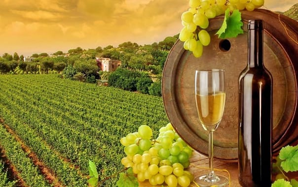 Wine-tuscany1.jpg.jpg