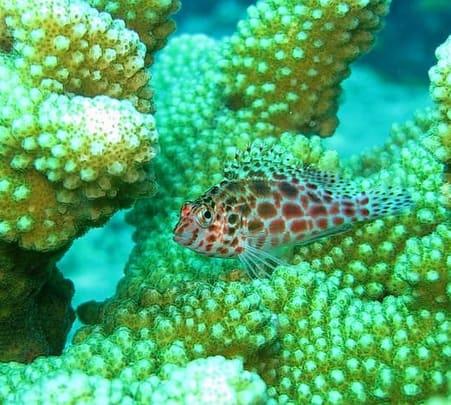 Andaman New Season Diver Special