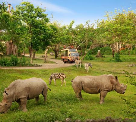 Safari and Marine Park Adventure in Bali