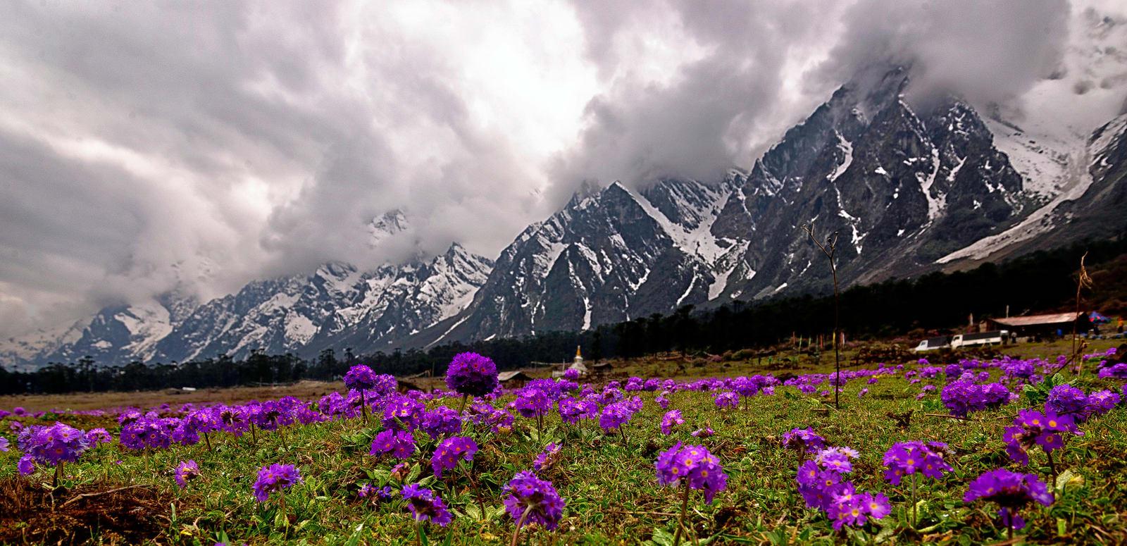 Image result for flower festival sikkim