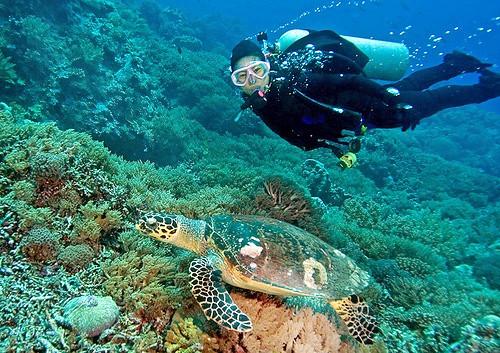 1549961534_coral-island-pattaya.png