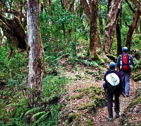Phanaswadi Waterfall Trek, Belgaum