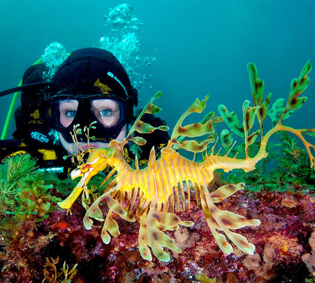 Snorkel with Sea Dragons in Melbourne