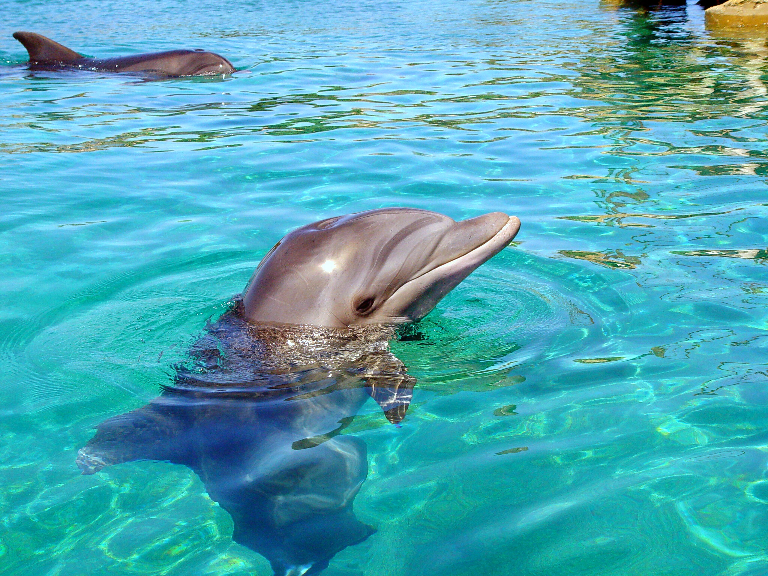 1464945434_pikiwiki_israel_15217_dolphin.jpg