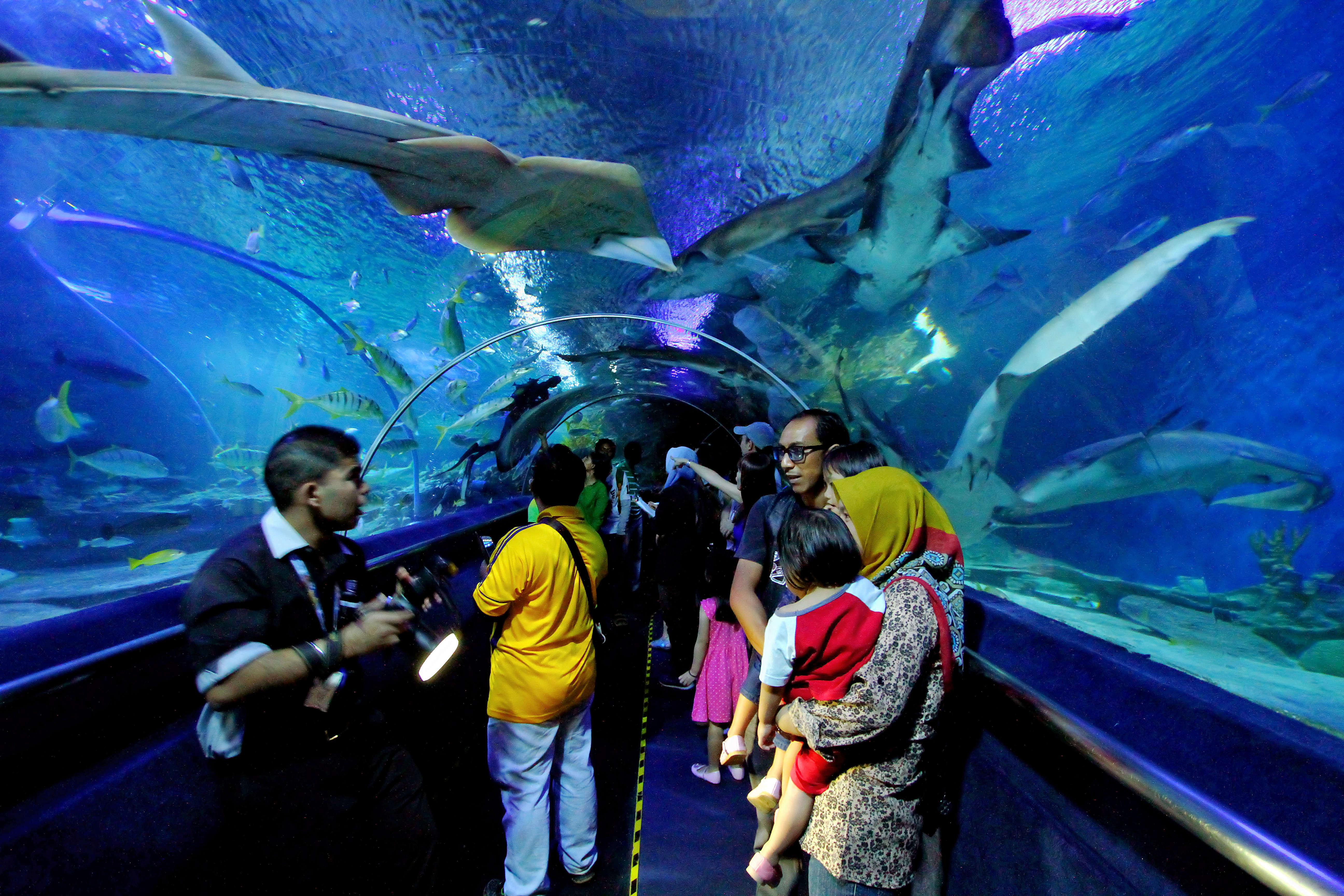 Underwater_tunnel_in_aquaria_klcc.jpg