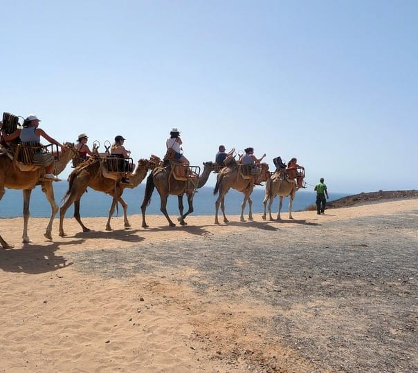 15 best camel safari tours in dubai camel safari in dubai altavistaventures Choice Image
