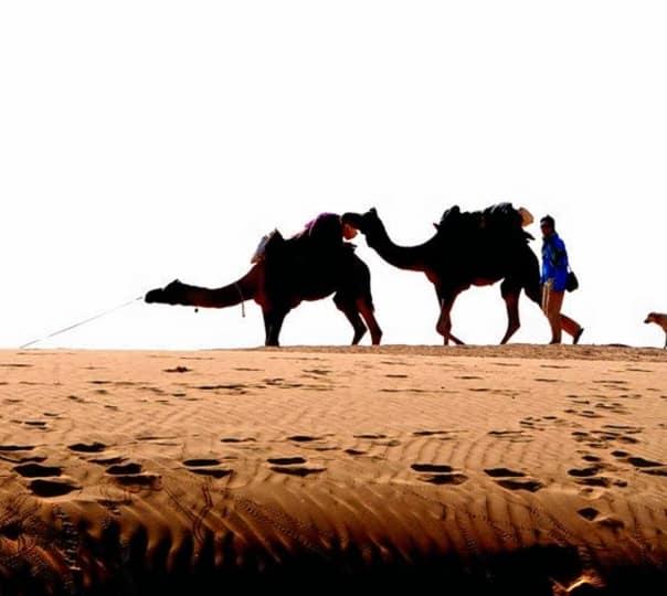 Desert Safari at Jaisalmer