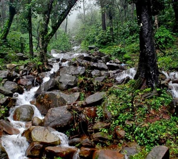 One Day Chikmagalur Sightseeing Tour