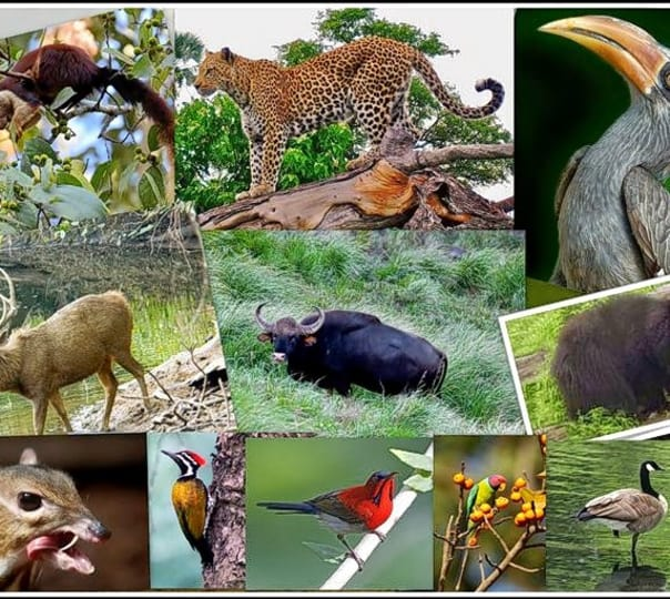 Dajipur & Radhanagari Wildlife Sanctuary Tour