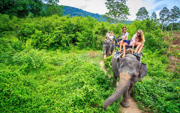 1552285067_elephant_trekking_in_thailand.jpg