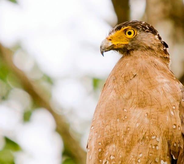 Deeg Excursion with Birding at Bharatpur