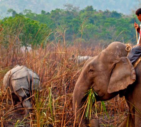 Wildlife Tour in Kaziranga National Park