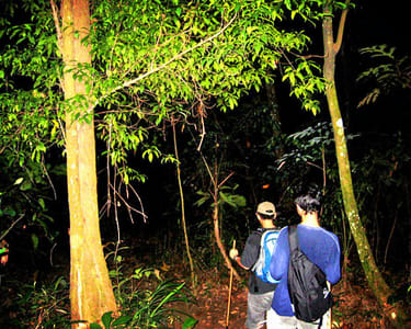 Night Trekking in Thekkady Flat 25% off