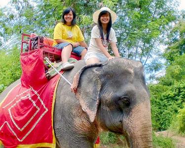 Elephant Trekking and Bamboo Rafting, Phuket Flat - 25% off